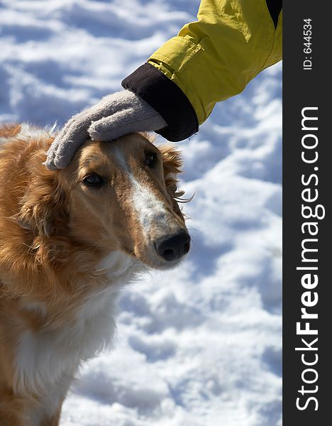Dog head and hand in winter