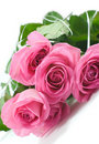 Free Five Pink Roses Royalty Free Stock Photos - 6403388