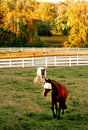 Free Horses In Field Stock Photography - 6403652