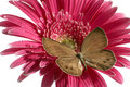 Free Butterfly On The Flower Royalty Free Stock Image - 6405656