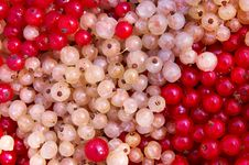 Free Currant Berry Stock Photo - 6400230