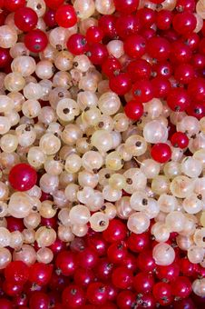 Free Currant Berry Royalty Free Stock Image - 6400246