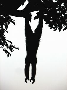 Free The Gibbon Silhoutte Stock Images - 6400954