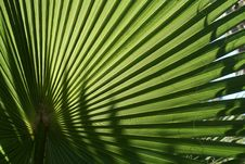 Free Palm Fan Stock Images - 6401534