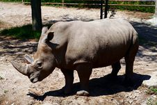 Free White Rhinoceros Stock Photography - 6401552