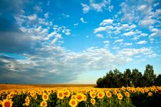 Free Yellow Field Stock Photos - 6401853