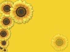 Free Sunflower Background Stock Photography - 6402062