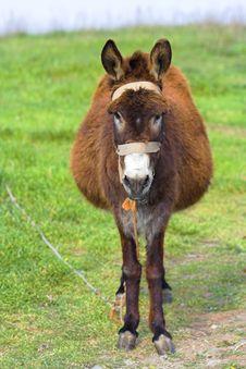 Free Funny Donkey Royalty Free Stock Photos - 6402888