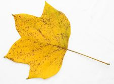 Free Autumn Leaf Royalty Free Stock Image - 6403546