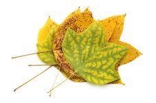 Free Autumn Leaves Stock Image - 6403561