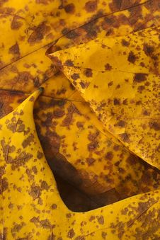 Free Autumn Leaf Royalty Free Stock Photo - 6403605