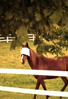 Free Horse With Fly Mask Royalty Free Stock Photos - 6403628