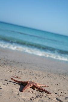 Sea-star Royalty Free Stock Image