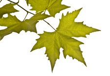Free Autumn Branch Royalty Free Stock Images - 6404079
