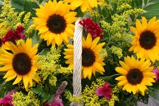 Free Flower Gift Basket Stock Images - 6404234