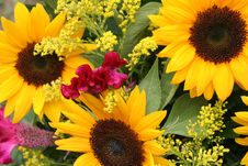 Free Flower Gift Basket Stock Image - 6404321