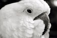 Free Parrot Royalty Free Stock Images - 6406389