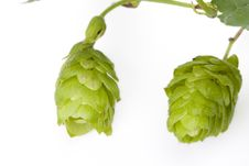 Free Hop Fruit Stock Photo - 6406580