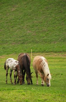 Free Three Horses Stock Photo - 6406940