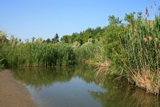 Free Small Creek Royalty Free Stock Photo - 6407575
