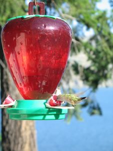 Free Hummingbird Royalty Free Stock Photography - 6407597