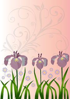 Free Flower Royalty Free Stock Photo - 6409415