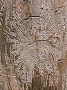 Free Texture Of Dry Tree 11 Stock Photos - 6410693