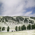 Free Snow In Summer Mountains Stock Photography - 6413542