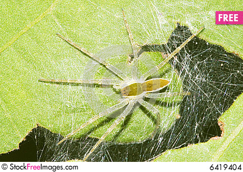 The Spide - Free Stock Photos ...