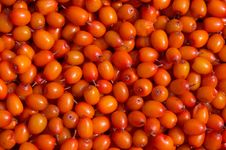 Free Sea-buckthorn Background Royalty Free Stock Photos - 6410288