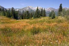 Free Mountain Meadow Royalty Free Stock Photos - 6410848