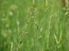 Free Meadow Grass Royalty Free Stock Photography - 6412107
