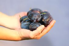 Free The Plums Stock Image - 6412311