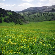 Flowers In High Mountains Stock Photos