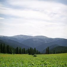 Free Forest In High Mountains Royalty Free Stock Images - 6412849