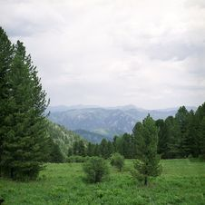 Free Forest In High Mountains Stock Photos - 6412953