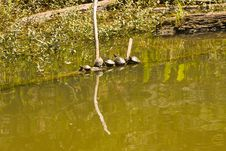 Free Five Turtles Stock Image - 6413041