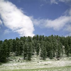 Snow In Summer Mountains Royalty Free Stock Photo