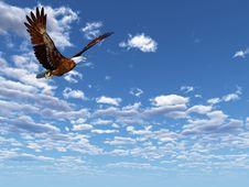 Free Eagle Stock Photos - 6414053