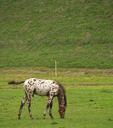 Free Foal Royalty Free Stock Images - 6415019