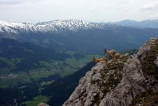 Free Capricorns In The Mountains Royalty Free Stock Photos - 6415038