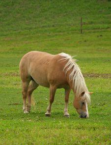 Free Horse Royalty Free Stock Photos - 6415088