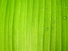 Free Wet Banana Leave Detail Royalty Free Stock Photo - 6415295