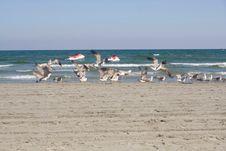 Free Seagulls Royalty Free Stock Image - 6415296