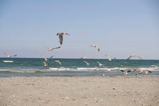 Free Seagulls Royalty Free Stock Images - 6415359