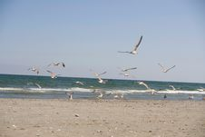 Free Seagulls Royalty Free Stock Photos - 6415368