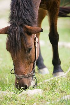 Free Horse Royalty Free Stock Photography - 6415387