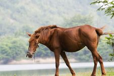 Free Horse Stock Photo - 6415400