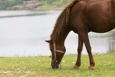 Free Horse Stock Photo - 6415620