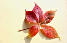 Free One Autumn Leaf Royalty Free Stock Photos - 6416288